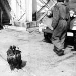 "In preajma Zilei Nationale a Romaniei, ""Vulturul Ilie"", un mit redat buzoienilor"