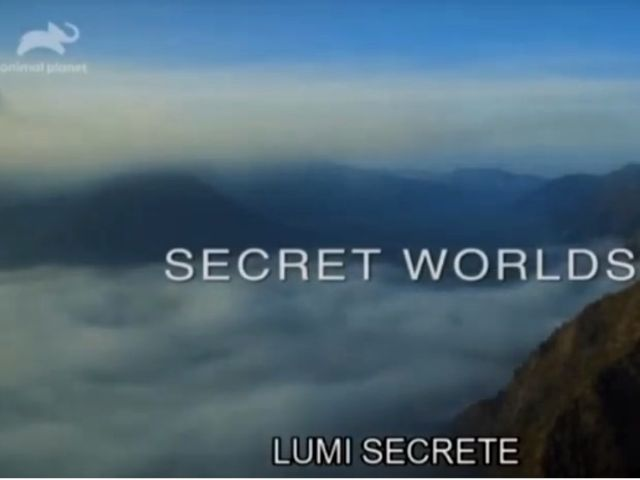 Lumi secrete Indonezia